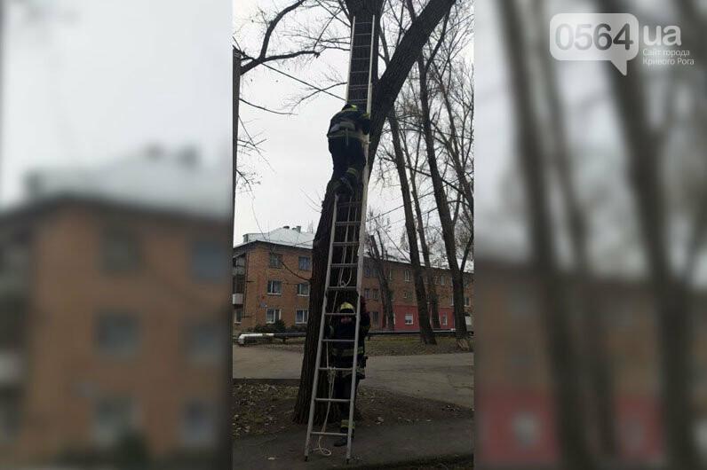 В Кривом Роге спасли домашнего любимца, который несколько суток просидел на дереве, - ФОТО , фото-4