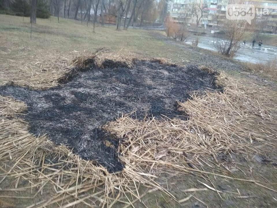 Выбросили 14 урн в реку, сожгли камыш, разобрали тротуарную плитку: в криворожском парке орудовали вандалы, - ФОТО , фото-8