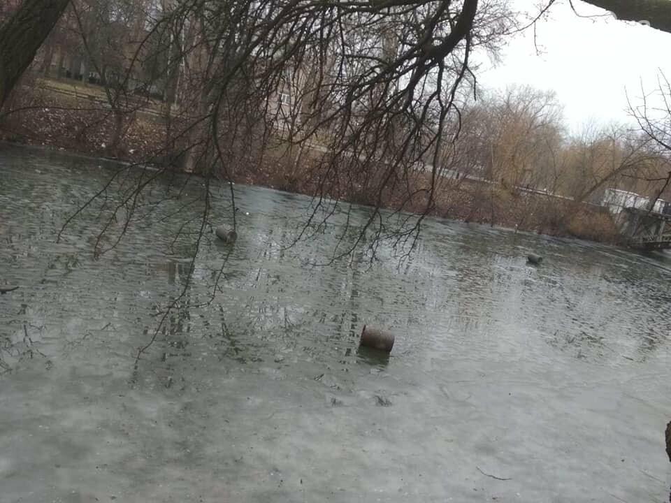 Выбросили 14 урн в реку, сожгли камыш, разобрали тротуарную плитку: в криворожском парке орудовали вандалы, - ФОТО , фото-5