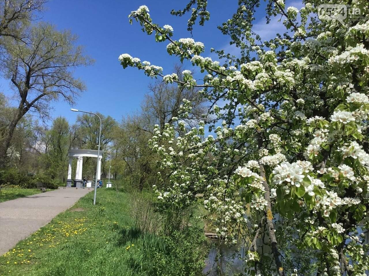 Прогулки, фотосессии, отдых на природе, - как криворожане провели первые дни мая, - ФОТО, ВИДЕО, фото-11