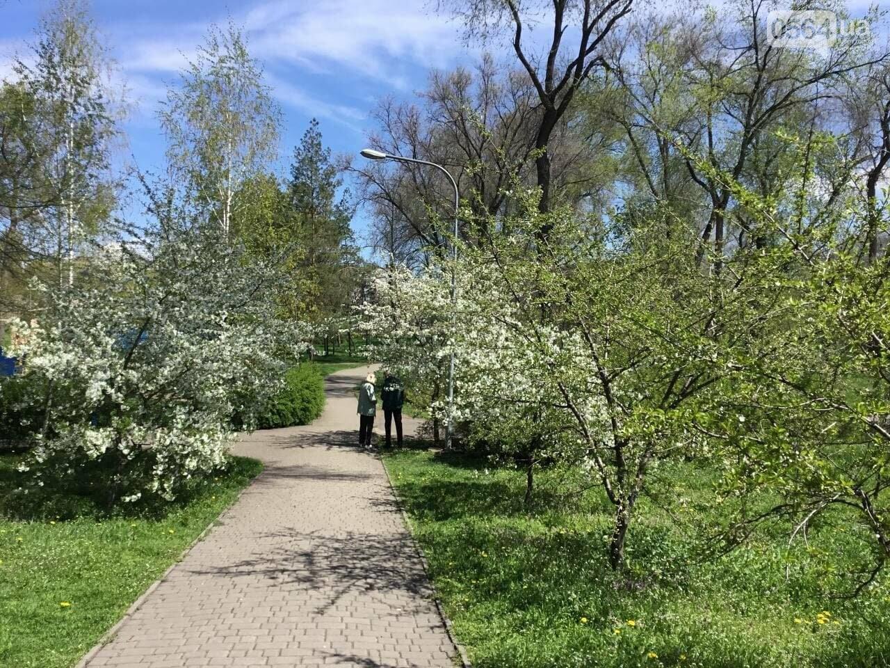Прогулки, фотосессии, отдых на природе, - как криворожане провели первые дни мая, - ФОТО, ВИДЕО, фото-16