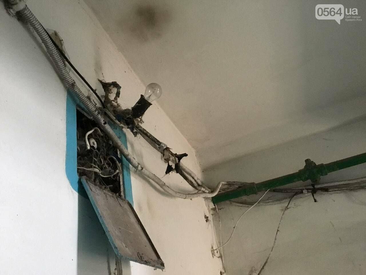 """""""В доме влага и в трещины, а в соседней квартире живут голуби и тараканы"""", - криворожане с улицы Соборности, - ФОТО, ВИДЕО, фото-4"""