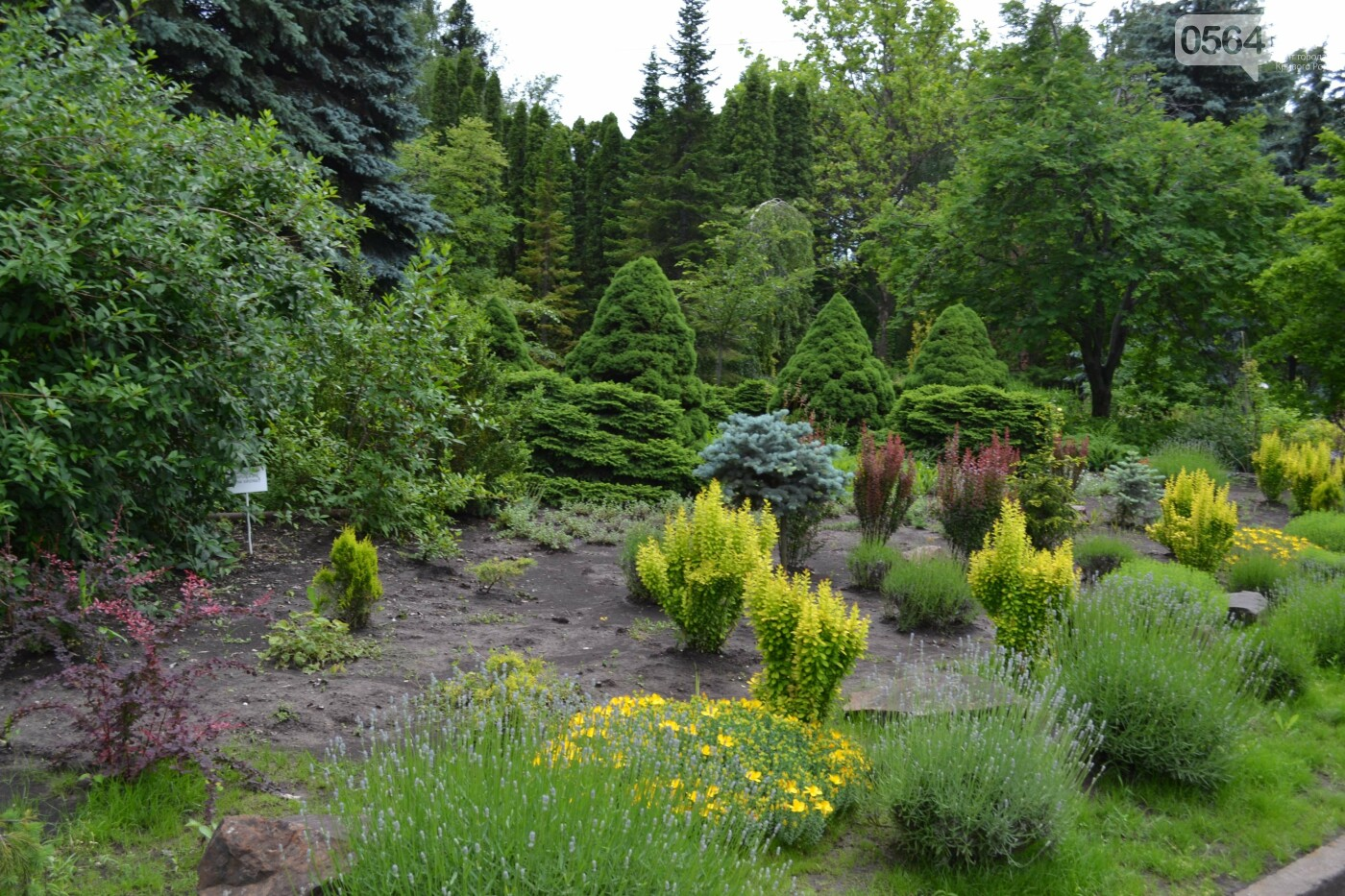 О чем она молчит: в Криворожском ботаническом саду стартовал «женский»  проект, - ФОТО, ВИДЕО, фото-40