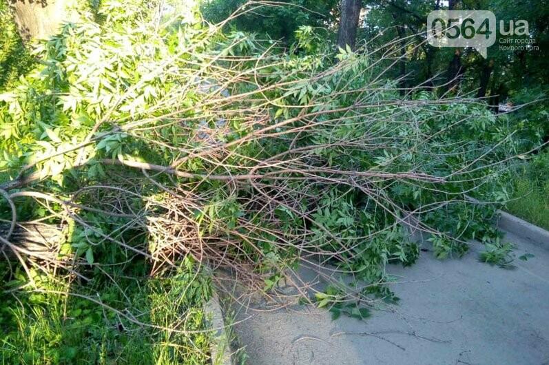 Спасатели убрали упавшее дерево возле криворожской больницы, - ФОТО, фото-1