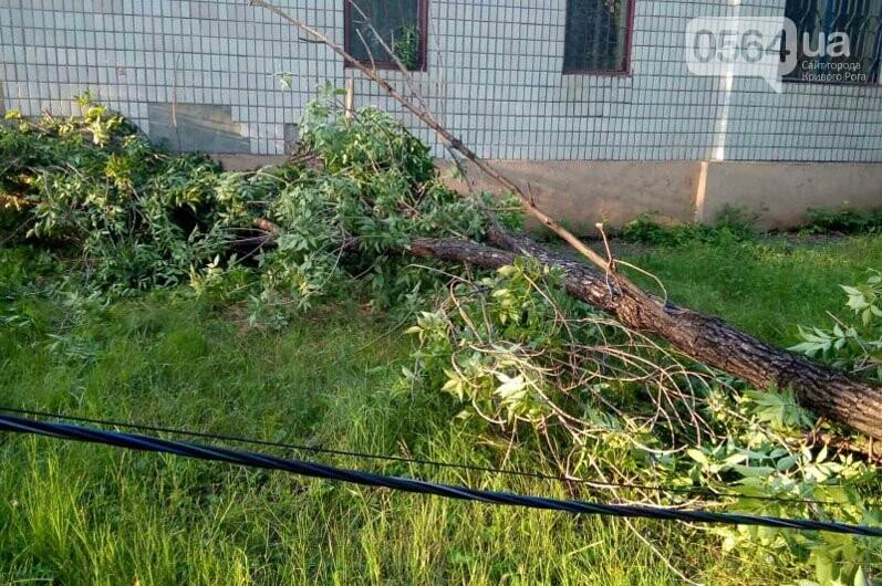 Спасатели убрали упавшее дерево возле криворожской больницы, - ФОТО, фото-2