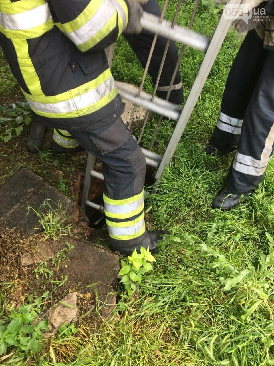 В Кривом Роге кот провалился в канализационный люк, - ФОТО , фото-1