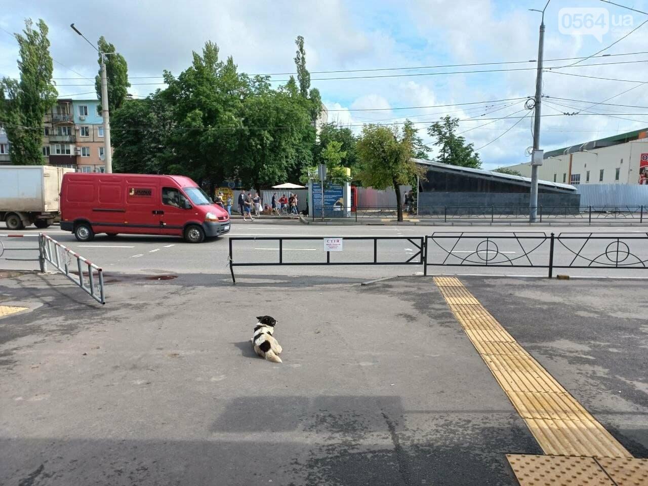 Возле Центрального рынка в Кривом Роге закрыли наземный переход и открыли подземный, - ФОТО, фото-13