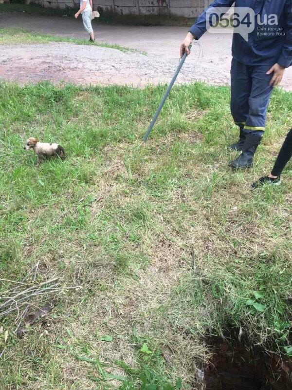 В Кривом Роге на Троицу спасли щенка, упавшего в колодец, - ФОТО, фото-4