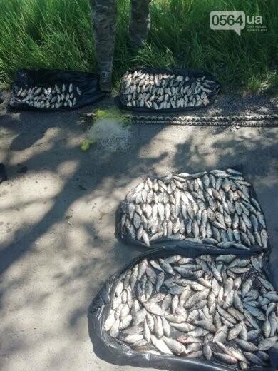 В течение нерестового запрета на Днепропетровщине изъято почти 2 тонны незаконной рыбы, - ФОТО, фото-4
