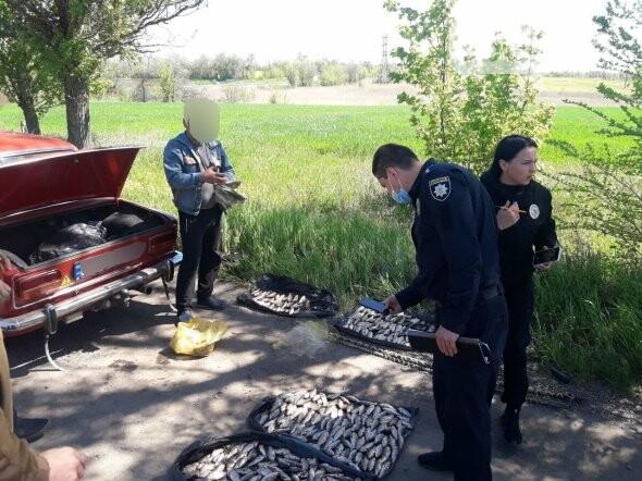 В течение нерестового запрета на Днепропетровщине изъято почти 2 тонны незаконной рыбы, - ФОТО, фото-1