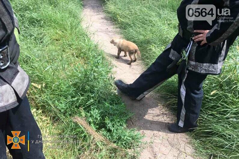 Криворожские спасатели спасли щенков упавших в канализационный колодец - ФОТО, фото-2