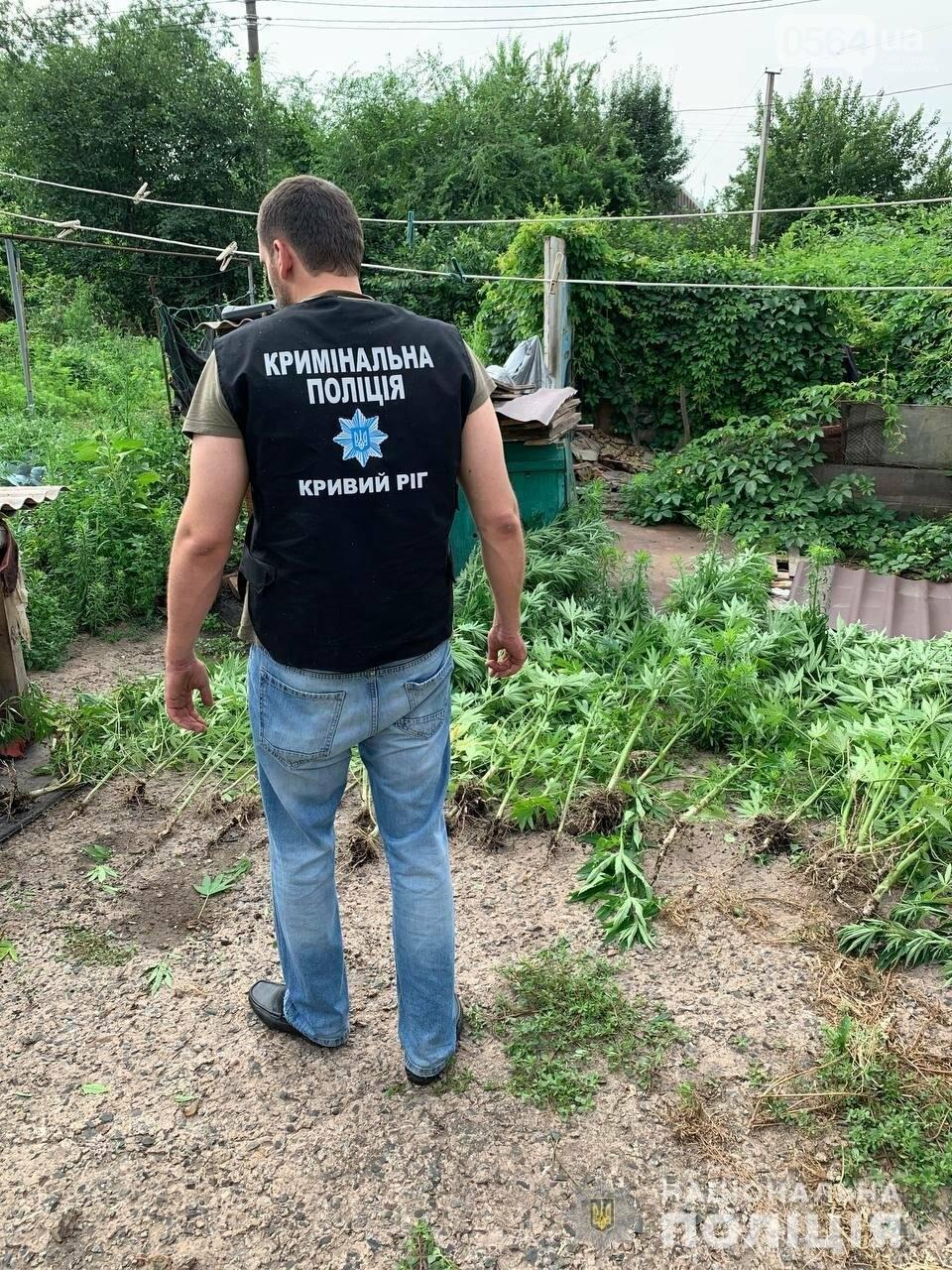 В Кривом Роге полицейские нашли где растёт 2-х метровая конопля, - ФОТО,ВИДЕО, фото-3