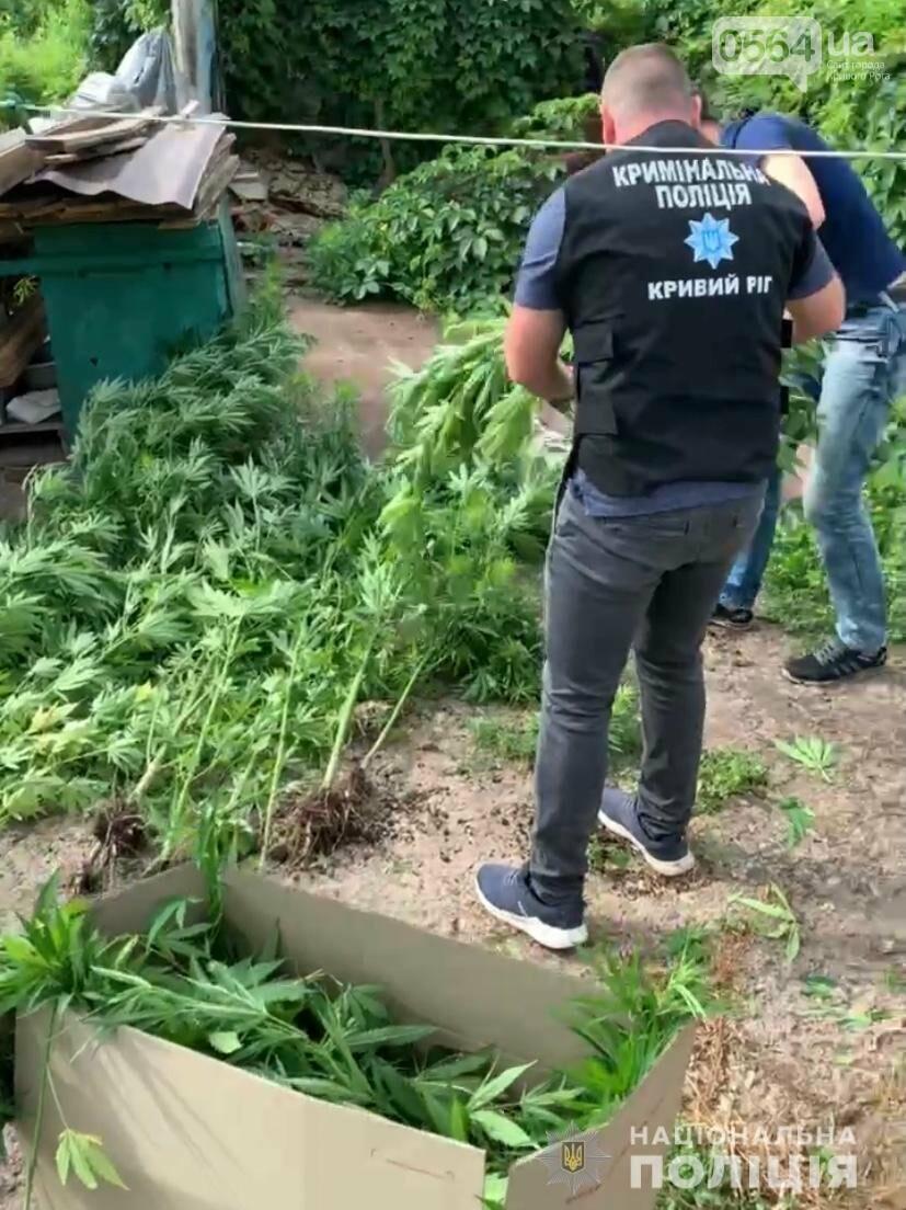 В Кривом Роге полицейские нашли где растёт 2-х метровая конопля, - ФОТО,ВИДЕО, фото-2
