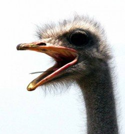 Логотип - Страус Парк Ленд - страусиная ферма, экскурсионно-туристический комплекс