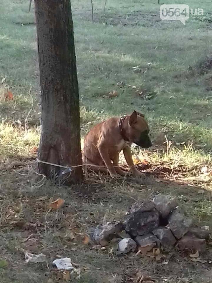 В Кривом Роге: оставили в парке погибать собаку, в ДТП пострадала беременная, в тубдиспансере нашли труп , фото-1
