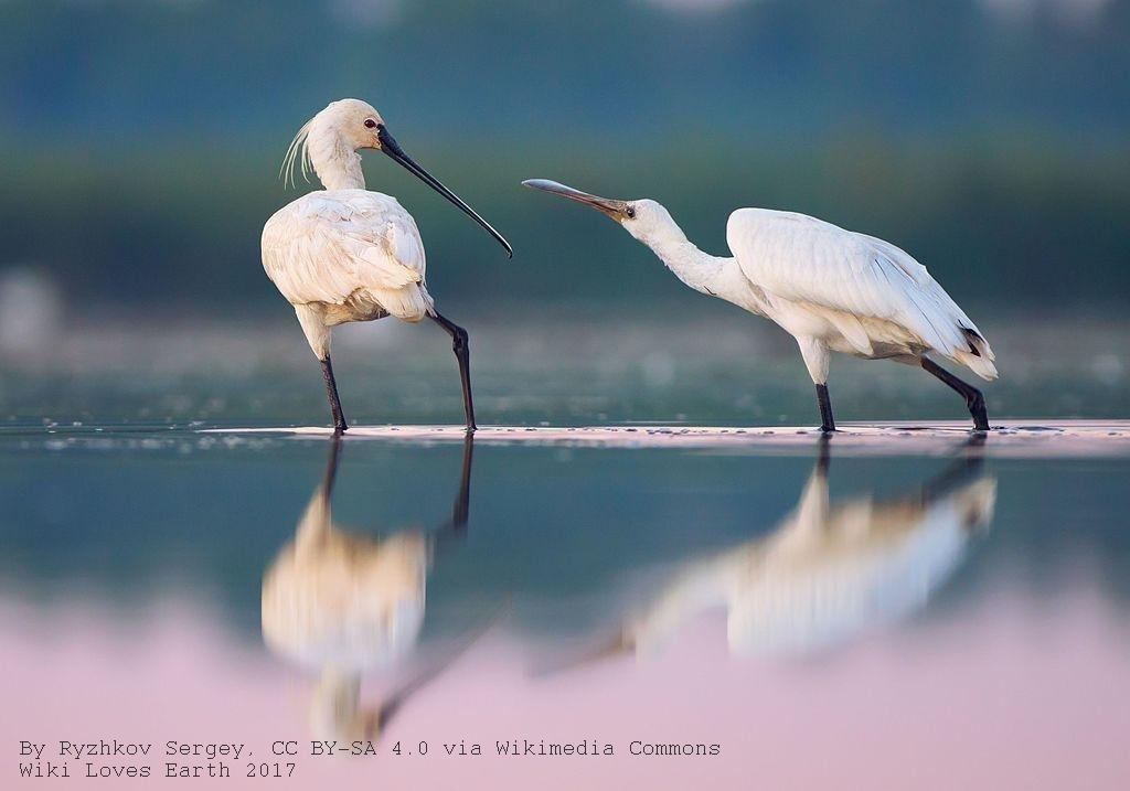 Лучшие фото украинской природы по версии Википедии, фото-2