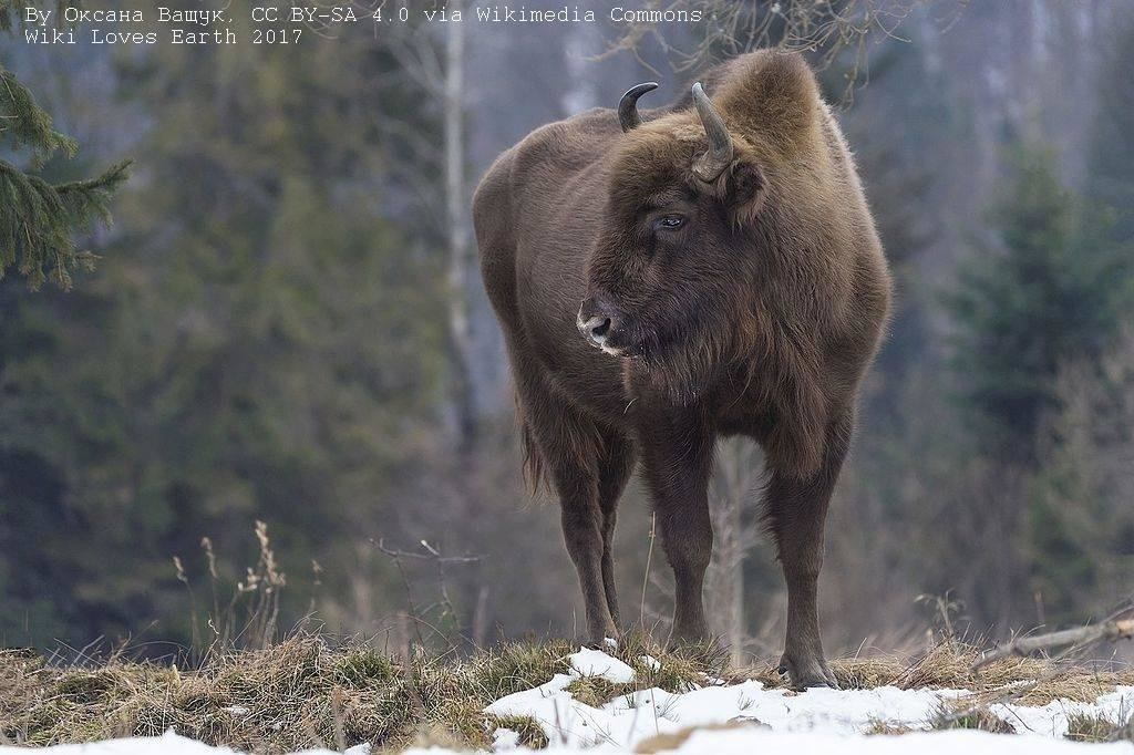 Лучшие фото украинской природы по версии Википедии, фото-6