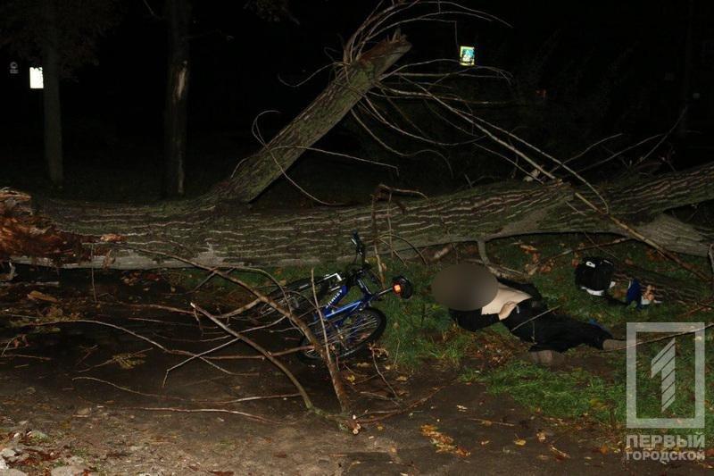Трагедия в Кривом Роге: Упавшее сухое дерево убило человека (ФОТО), фото-7