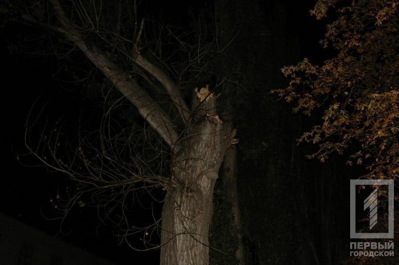 Трагедия в Кривом Роге: Упавшее сухое дерево убило человека (ФОТО), фото-1
