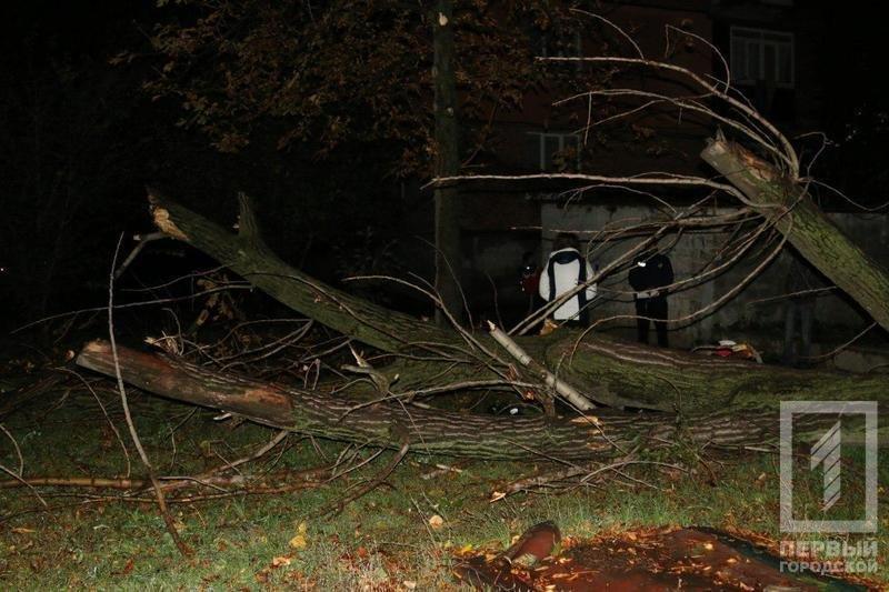 Трагедия в Кривом Роге: Упавшее сухое дерево убило человека (ФОТО), фото-3