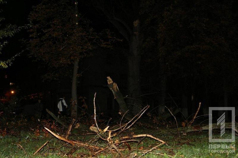 Трагедия в Кривом Роге: Упавшее сухое дерево убило человека (ФОТО), фото-4