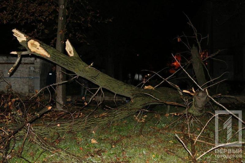 Трагедия в Кривом Роге: Упавшее сухое дерево убило человека (ФОТО), фото-6