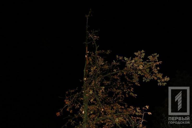Трагедия в Кривом Роге: Упавшее сухое дерево убило человека (ФОТО), фото-2