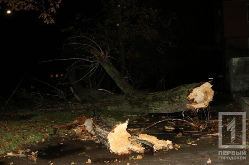 Трагедия в Кривом Роге: Упавшее сухое дерево убило человека (ФОТО), фото-5