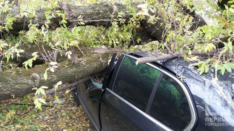 В Кривом Роге упавшее дерево смяло иномарку. Водитель вышел за мгновение до этого (ФОТО), фото-4