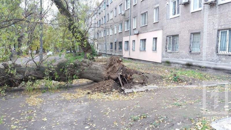 В Кривом Роге упавшее дерево смяло иномарку. Водитель вышел за мгновение до этого (ФОТО), фото-2