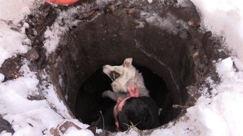 Криворожские журналисты спасли бездомную собаку, провалившуюся в колодец (ФОТО), фото-2