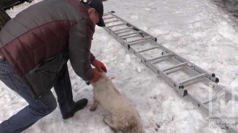 Криворожские журналисты спасли бездомную собаку, провалившуюся в колодец (ФОТО), фото-1