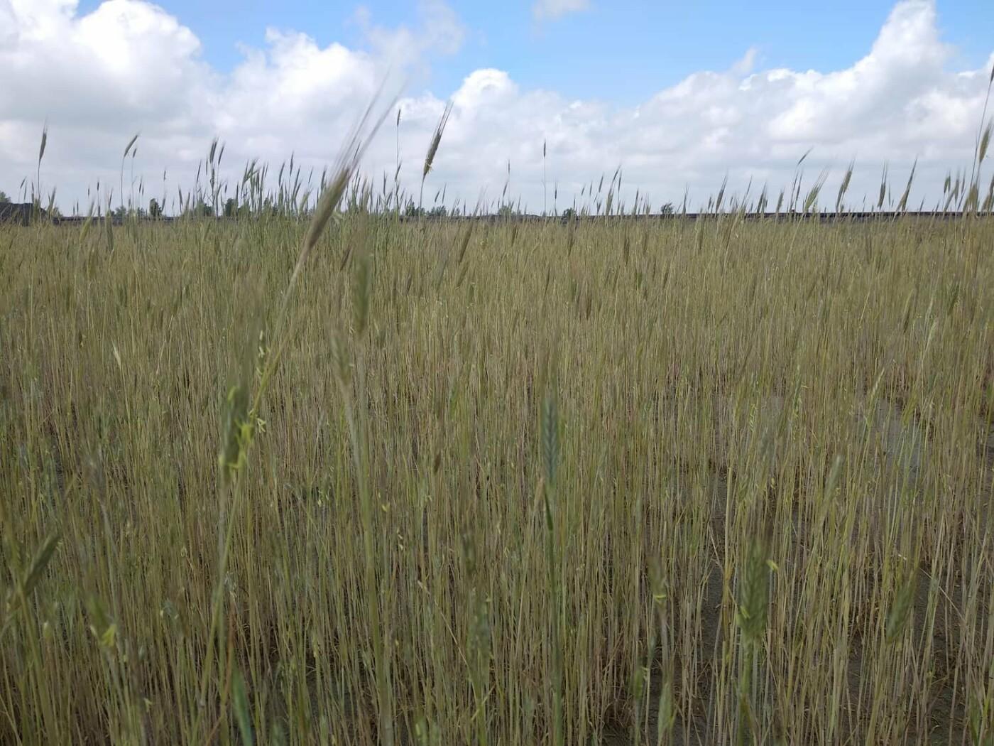 Экологи СевГОКа ищут эффективные способы борьбы с пылью, фото-2