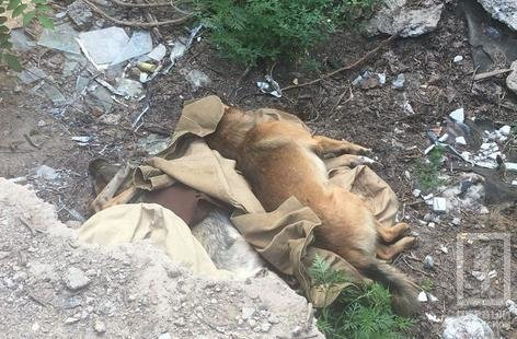 На детской площадке криворожане обнаружили трупы бездомных собак, - ФОТО 18+ , фото-1