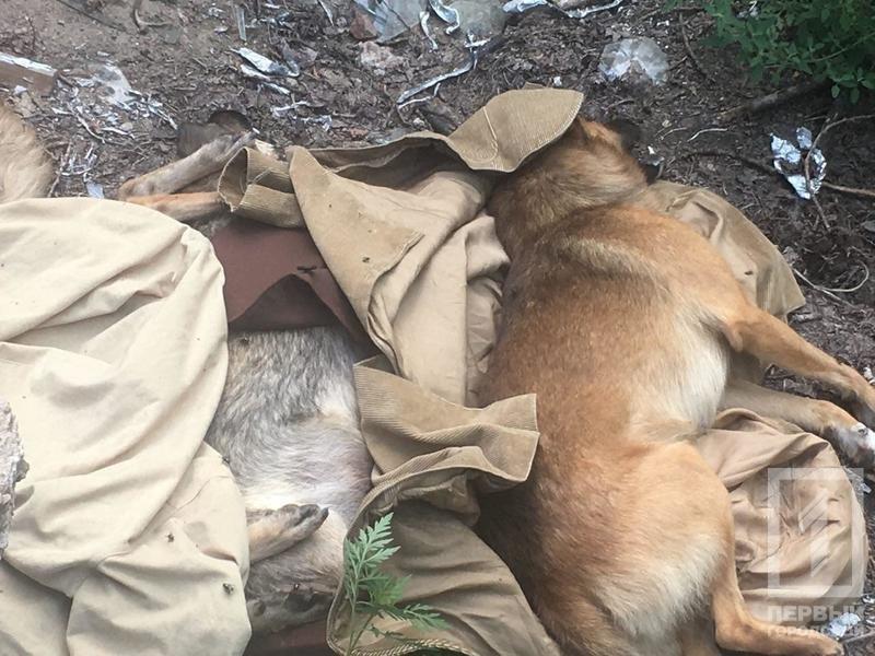 На детской площадке криворожане обнаружили трупы бездомных собак, - ФОТО 18+ , фото-2