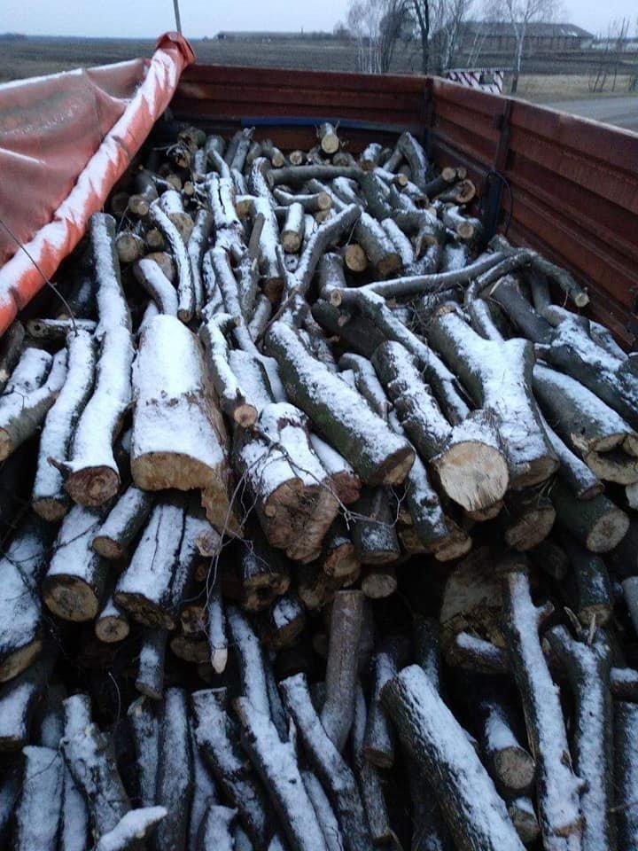 Криворожские нацгвардейцы задержали в зоне проведения ООС фуру с древесиной, - ФОТО , фото-2