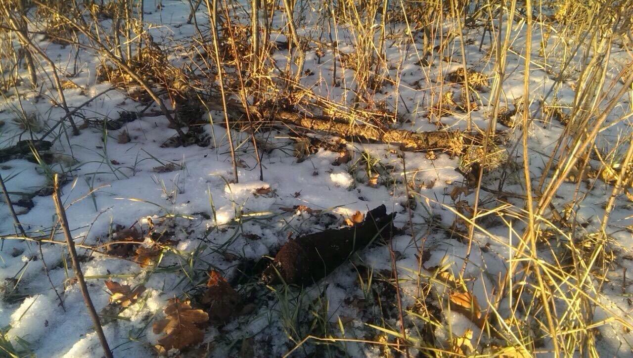 В Криворожском районе во время сбора дров обнаружили мину, - ФОТО , фото-2