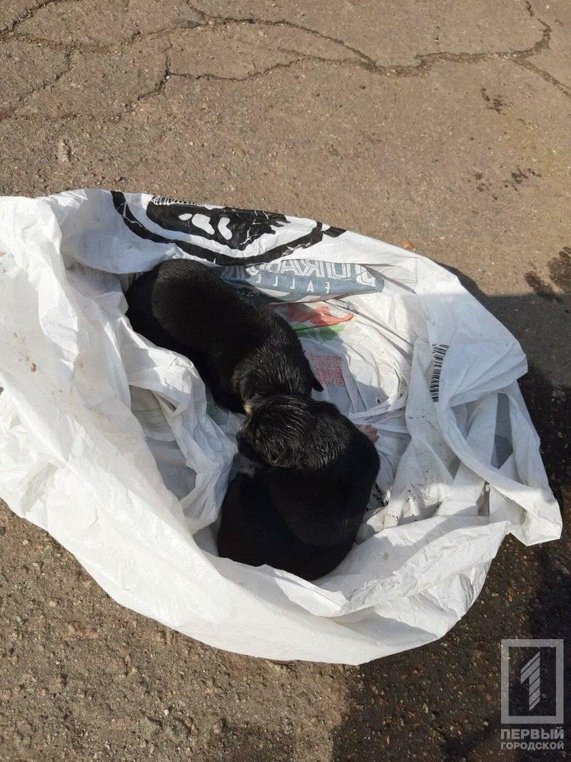 """В мусорном контейнере криворожане услышали """"детский плач"""" и обнаружили там выброшенных щенков, - ФОТО , фото-2"""