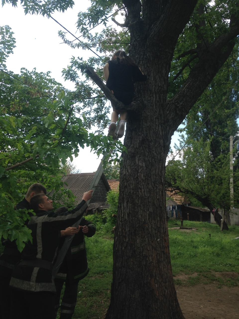 Спасатели сняли 9-летнюю криворожанку с дерева, - ФОТО , фото-1
