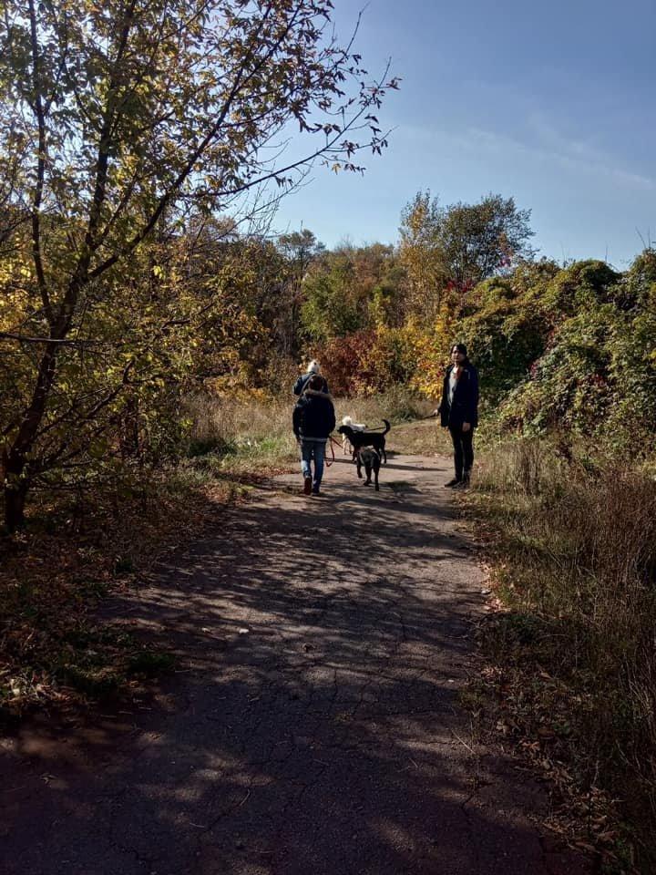 """""""Little Big Dog Walk"""": Криворожане выгуливали собак, которые ищут семью, - ФОТО, фото-5"""