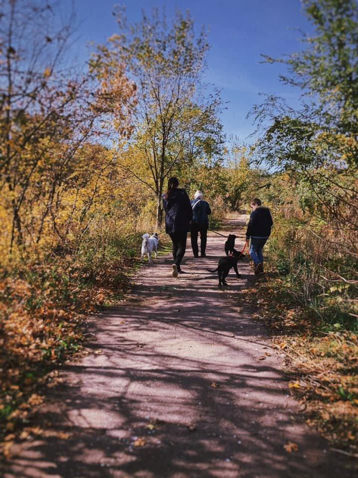 """""""Little Big Dog Walk"""": Криворожане выгуливали собак, которые ищут семью, - ФОТО, фото-8"""