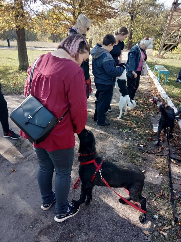 """""""Little Big Dog Walk"""": Криворожане выгуливали собак, которые ищут семью, - ФОТО, фото-3"""
