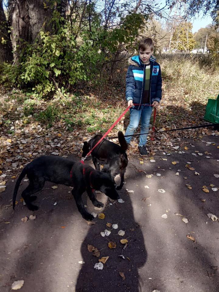 """""""Little Big Dog Walk"""": Криворожане выгуливали собак, которые ищут семью, - ФОТО, фото-4"""