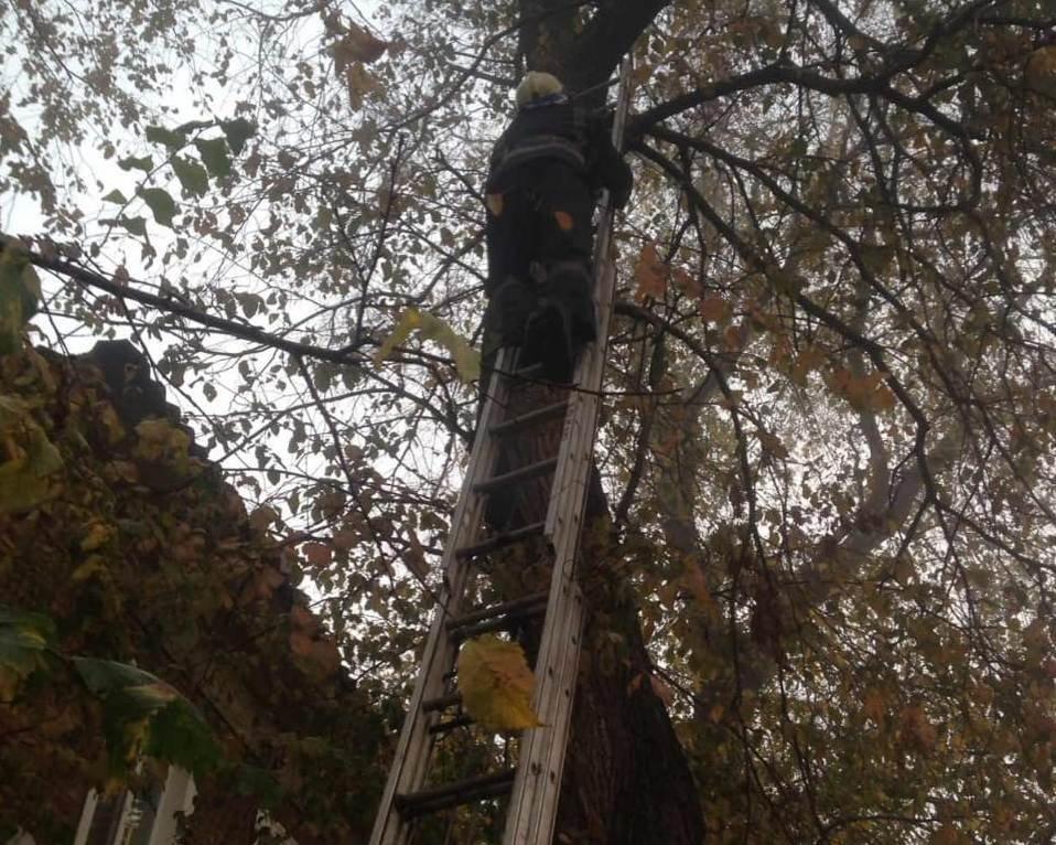 16 октября началось в Кривом Роге со спасения кота, - ФОТО, фото-1