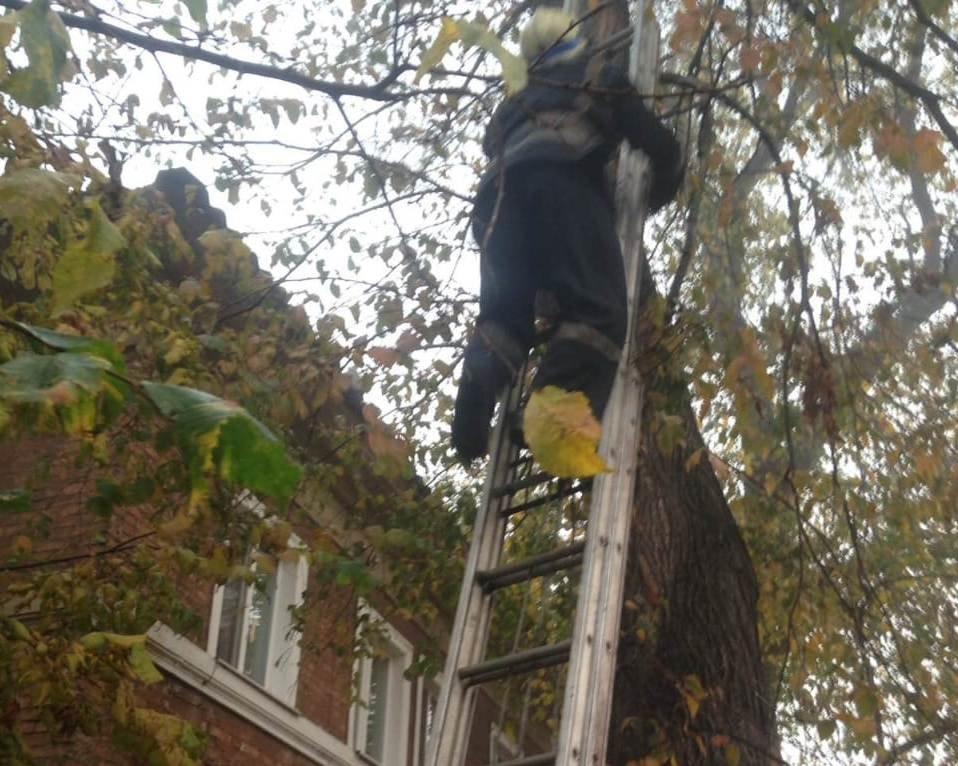 16 октября началось в Кривом Роге со спасения кота, - ФОТО, фото-2