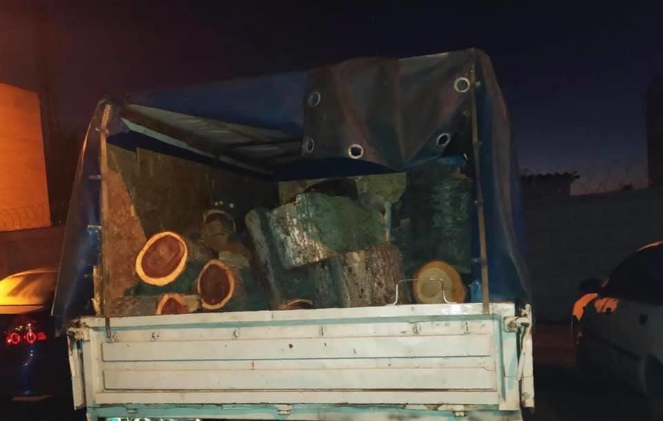 """Под Кривым Рогом """"черный лесоруб"""" попался со свежими стволами дубов, - ФОТО, фото-3"""