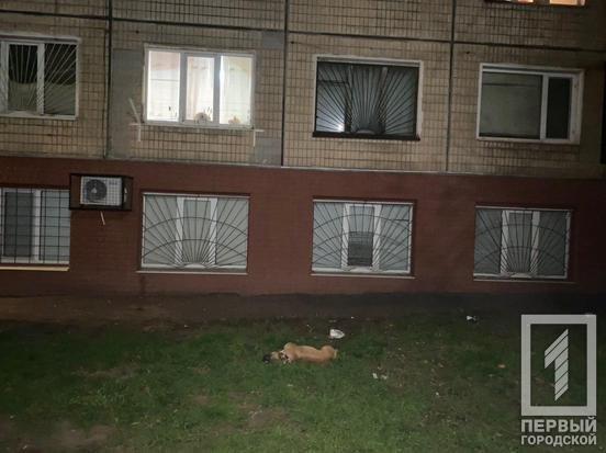 В Кривом Роге погиб пес, которого выбросили из окна многоэтажки, - ФОТО, фото-1