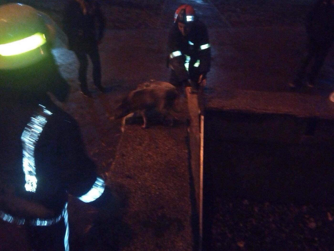 В Кривом Роге спасатели достали собаку, угодившую на дно бассейна, - ФОТО, фото-1