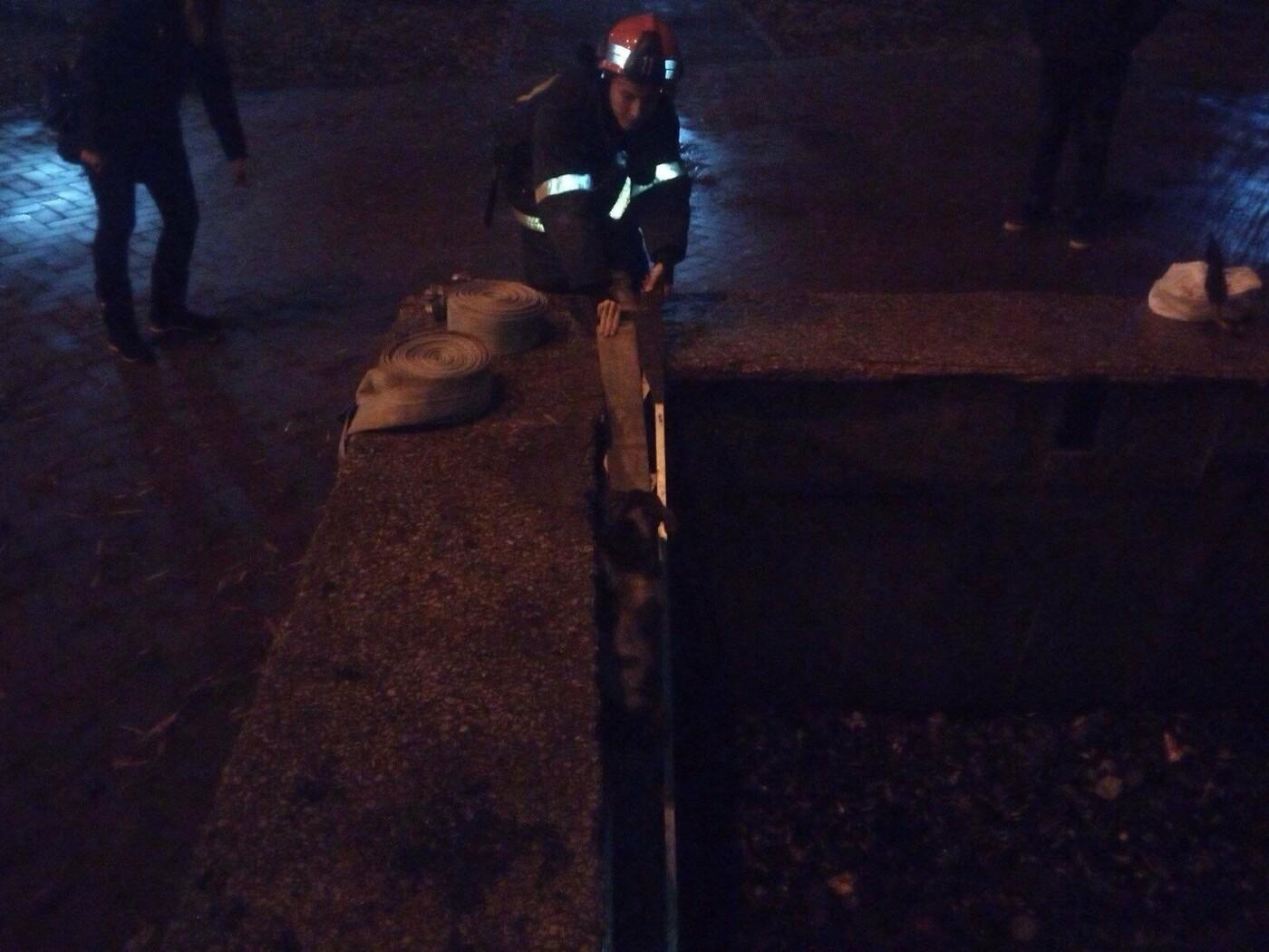 В Кривом Роге спасатели достали собаку, угодившую на дно бассейна, - ФОТО, фото-2