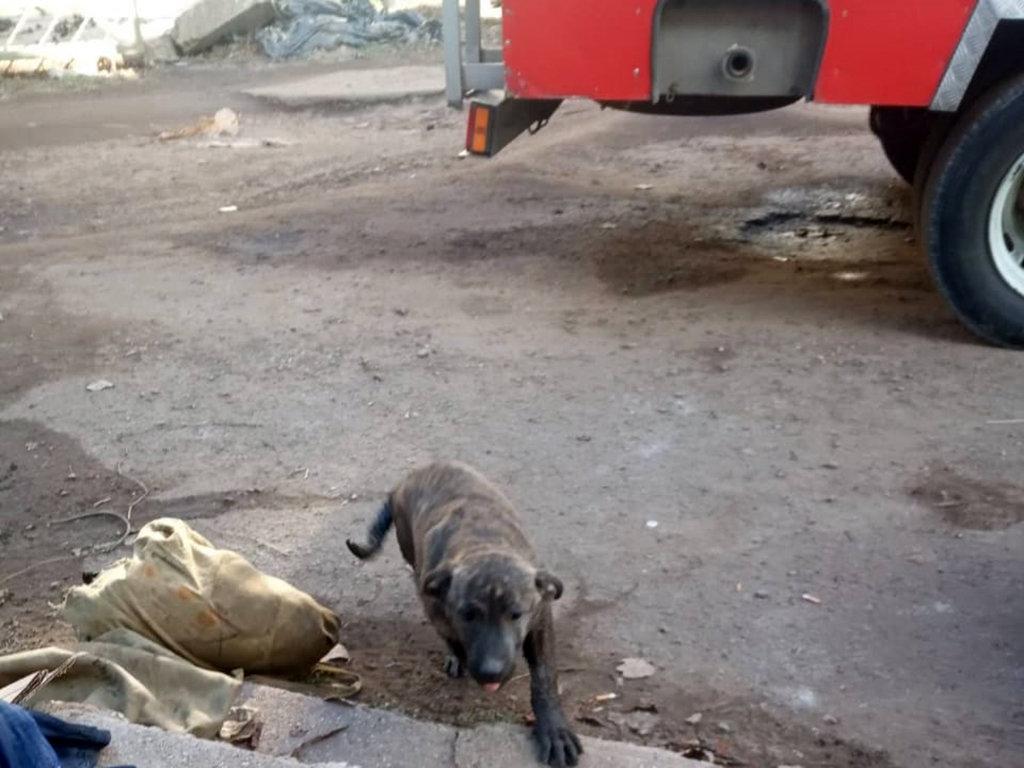 Спасатели в Кривом Роге пришли на помощь собаке, упавшей в канализационный колодец, - ФОТО, фото-3